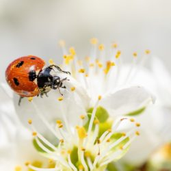 ladybug-4125852_1920